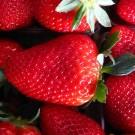Φράουλες Μαρτσούκος